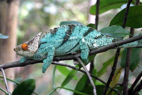 Самые необычные и удивительные ящерицы на Земле 8