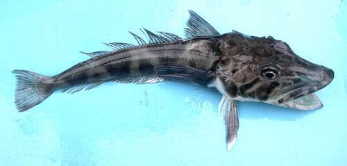 Самые удивительные, необычные и ужасные рыбы в мире 10