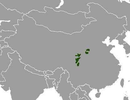 На каком материке и в какой стране обитает большая панда? 2
