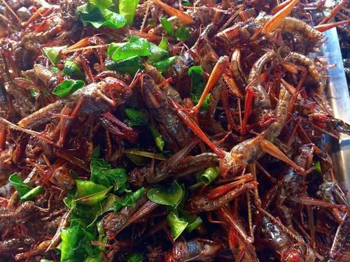 Членистоногое в азии употребляют в пищу