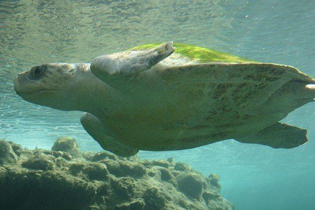 Самые известные представители животного мира Тихого океана 10