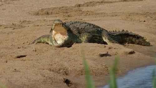 Характеристика, животный и растительный мир саванны Африки 10