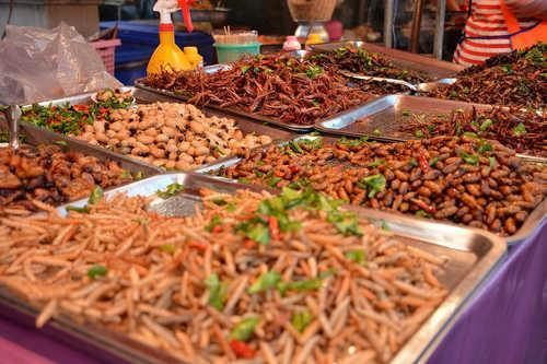 Каких насекомых едят люди? 7