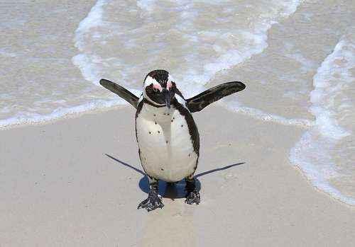 Самые интересные и познавательные факты про пингвинов 3