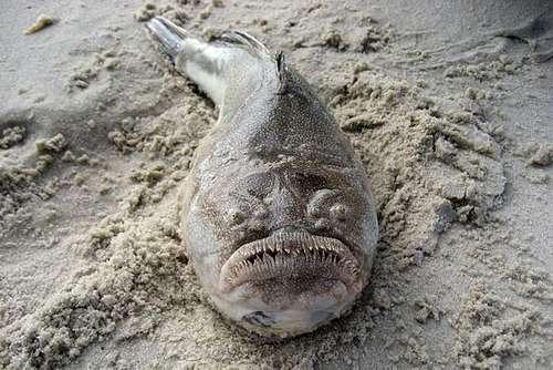 Самые удивительные, необычные и ужасные рыбы в мире 12