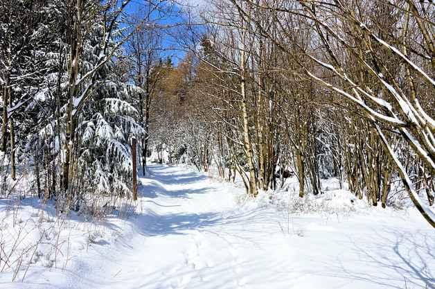 Сочинение на тему лес зимой