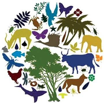 Виды, роль, снижение и охрана биологического разнообразия 4