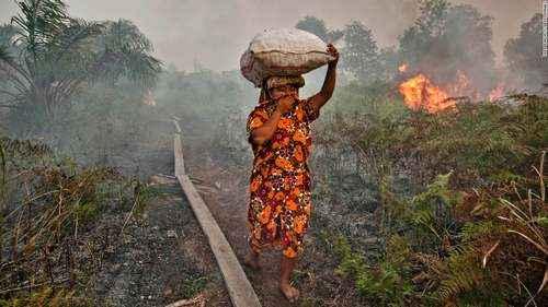 Причины лесных пожаров, их влияние на экологию и человека 15