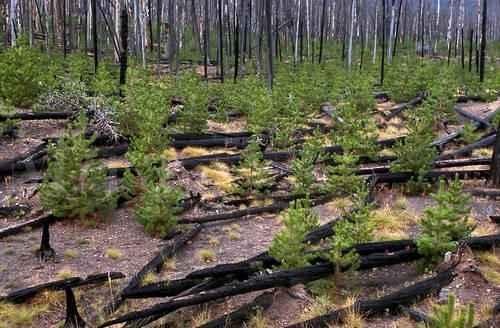 Причины лесных пожаров, их влияние на экологию и человека 14