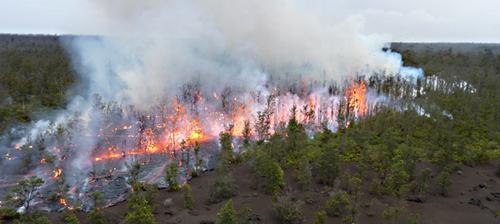 Причины лесных пожаров, их влияние на экологию и человека 9
