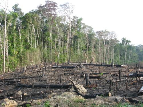 Причины лесных пожаров, их влияние на экологию и человека 11