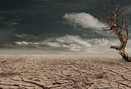 Причины лесных пожаров, их влияние на экологию и человека 13