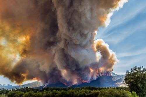 Причины лесных пожаров, их влияние на экологию и человека 12