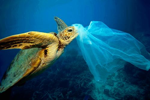 Причины появления большого тихоокеанского мусорного пятна 4