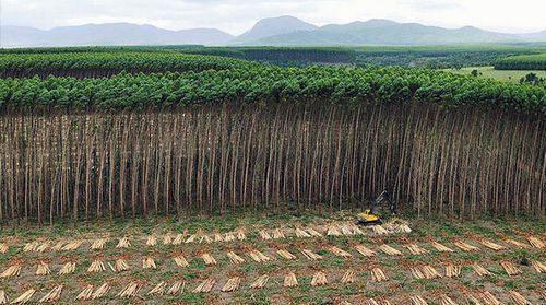 Экология России: список проблем и защита окружающей среды в стране 2