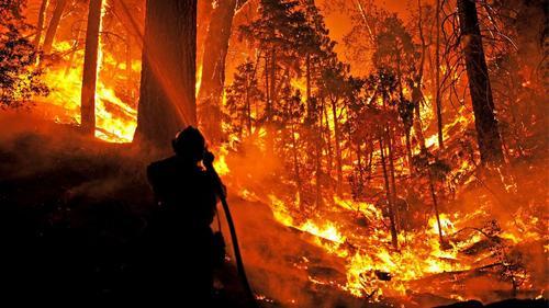 Причины лесных пожаров, их влияние на экологию и человека 7