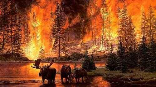 Причины лесных пожаров, их влияние на экологию и человека 10
