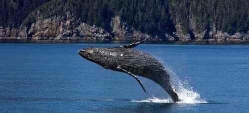 Каково значение животных в природе и жизни человека? 20 примеров, почему животные важны 17