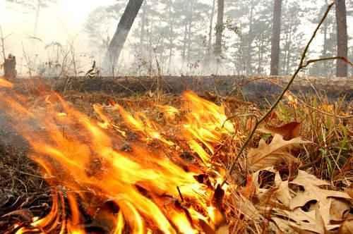 Причины лесных пожаров, их влияние на экологию и человека 4