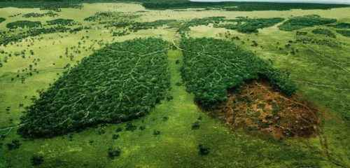 Виды, роль, снижение и охрана биологического разнообразия 5
