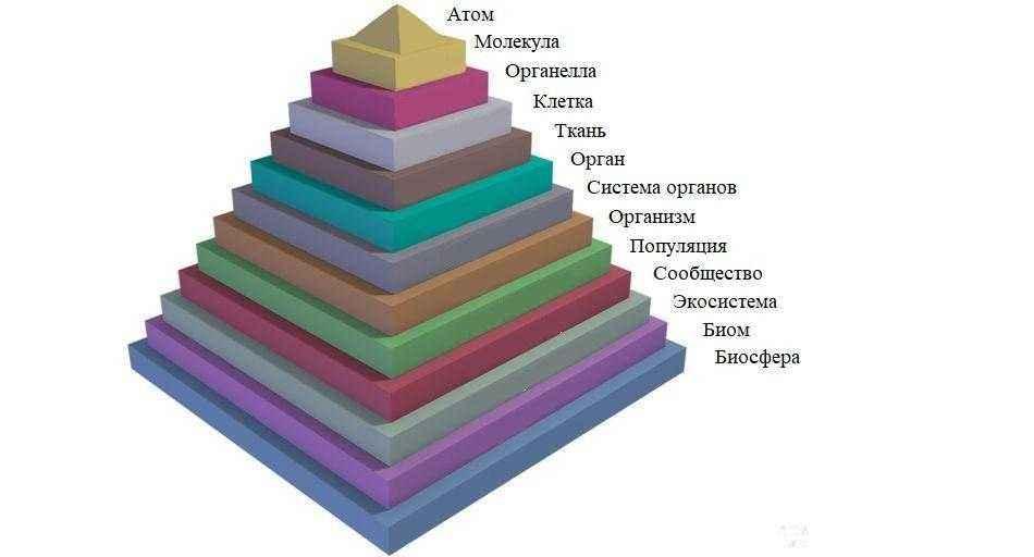 Пирамида уровней организации жизни на Земле: от атомов до биосферы 2