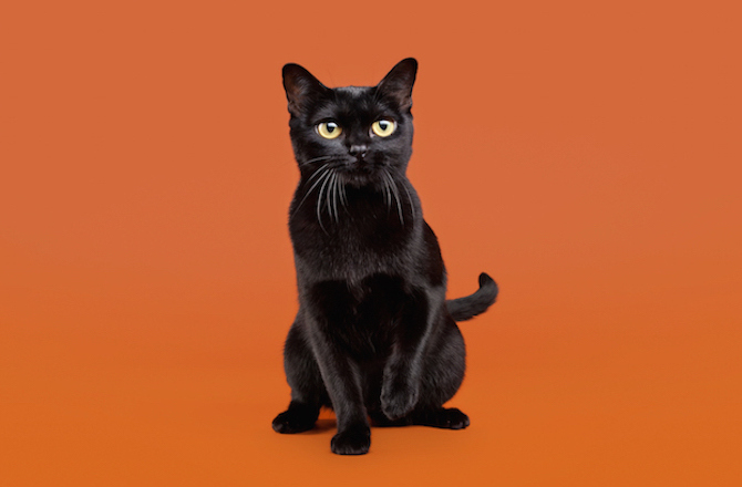 ТОП 10: Самые красивые породы кошек в мире - названия, краткое описание и фото 10
