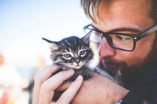 Что нравится кошкам? 10