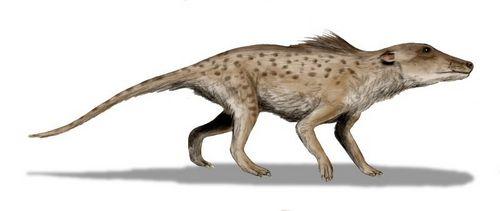 Отряд парнокопытные - одни из самых крупных животных среди наземных млекопитающих 2