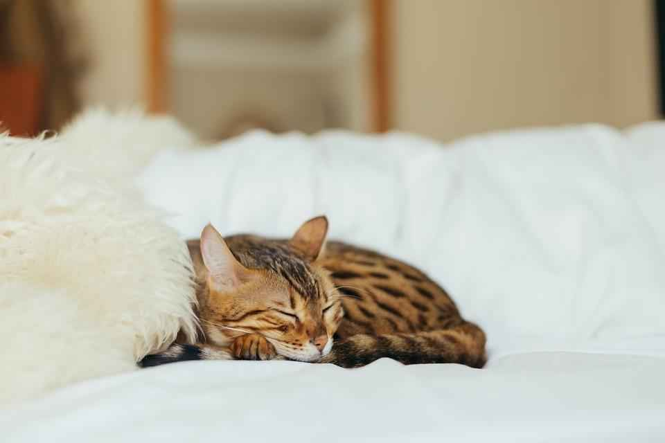 Что нравится кошкам? 5