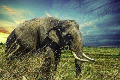 Какие виды животных самые крупные на Земле - список, характеристика и фото 9