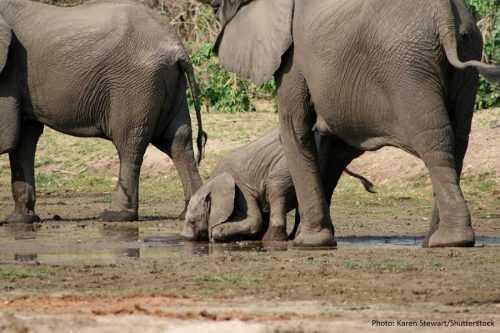 Каково значение животных в природе и жизни человека? 20 примеров, почему животные важны 8
