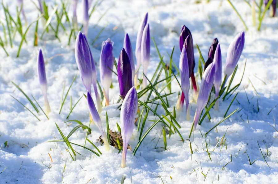 ранняя весна фото