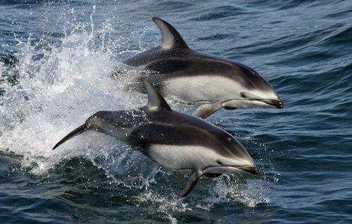 Самые известные представители животного мира Тихого океана 14