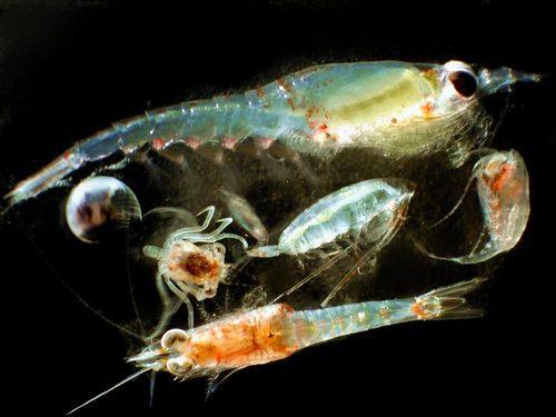 Световое загрязнение оказывает негативное влияние на зоопланктон 2