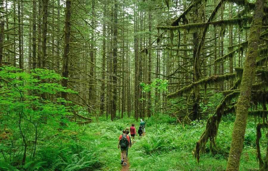 Лесное природное сообщество: особенности, значение для человека, флора и фауна 5