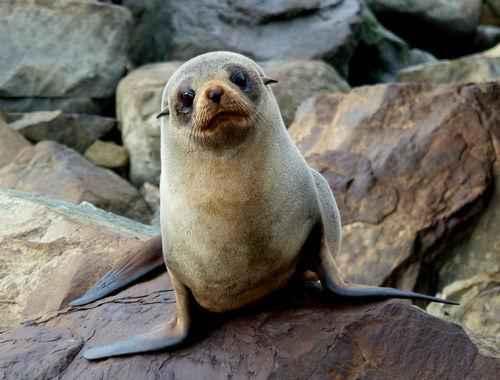 Самые известные представители животного мира Тихого океана 6