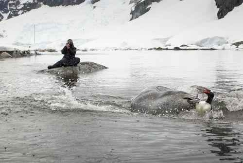 Самые интересные факты про морского леопарда 4