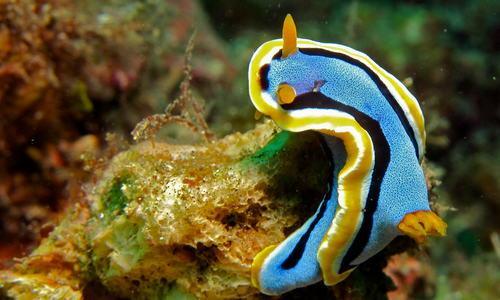 Самые известные представители животного мира Тихого океана 11
