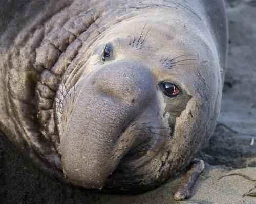 Самые известные представители животного мира Тихого океана 7