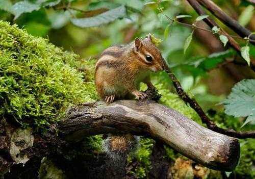 Какие животные обитают в лесах - названия, фото и описание 8