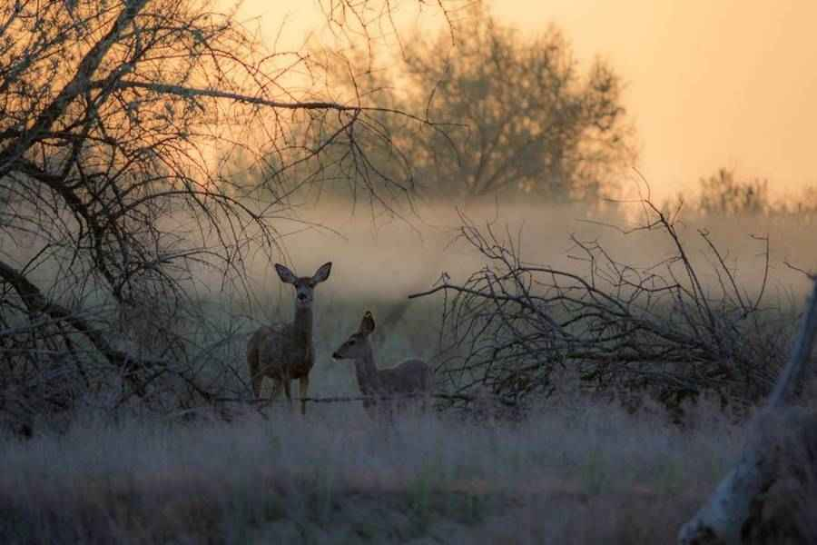 Сумеречные животные — характеристика, адаптация и примеры