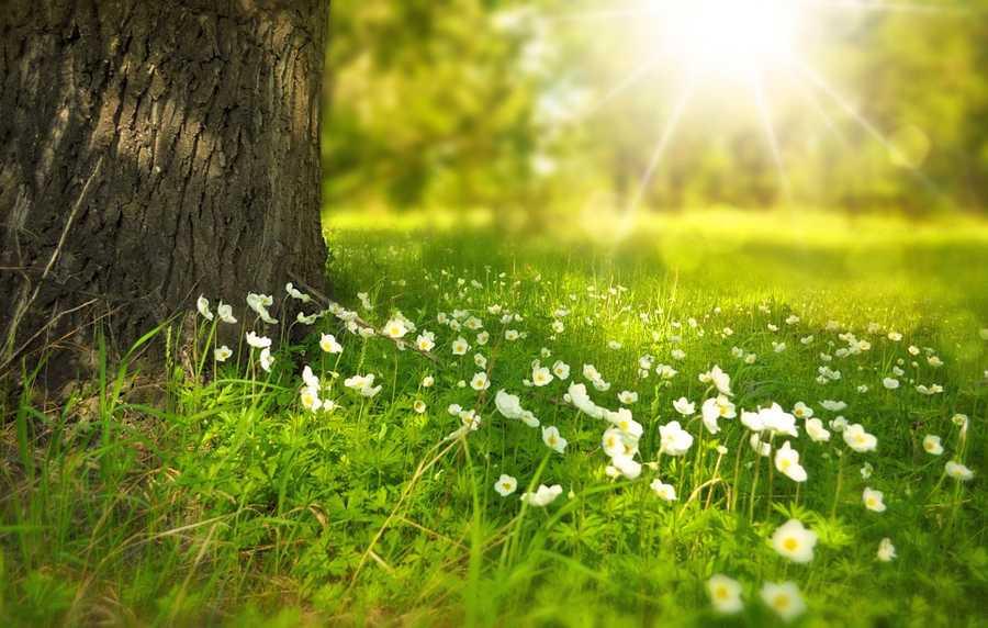 Сочинение на тему: «Весна наступила»