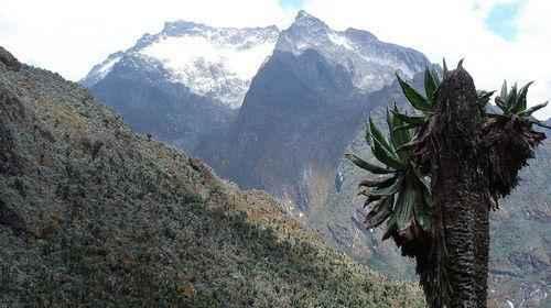 ТОП 10 крупнейших горных вершин Африки - высота, характеристика и фото 8