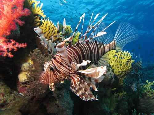 ТОП-16 смертоносных и ядовитых рыб на Земле 10