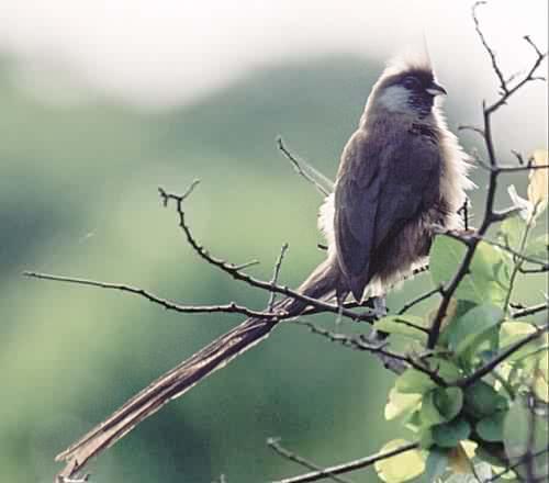 Отряды класса птиц - список, названия, фото и краткое описание 20