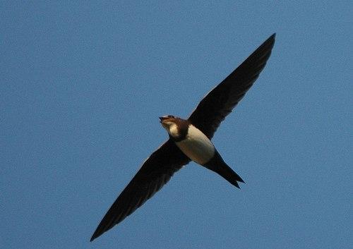 Отряды класса птиц - список, названия, фото и краткое описание 25