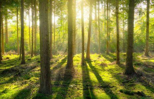 Экосистема леса - характеристика, структура и типы 2