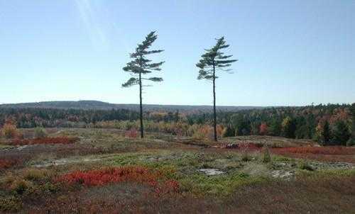 Природные зоны России: карта, названия, географическая характеристика и таблица 5