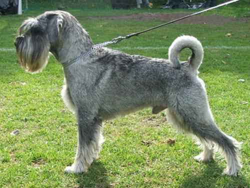 ТОП 10 пород собак средних размеров - список, названия, масса, фото и описание 9