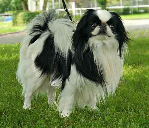 ТОП 15 небольших пород собак - названия, фото, размеры и краткое описание 13